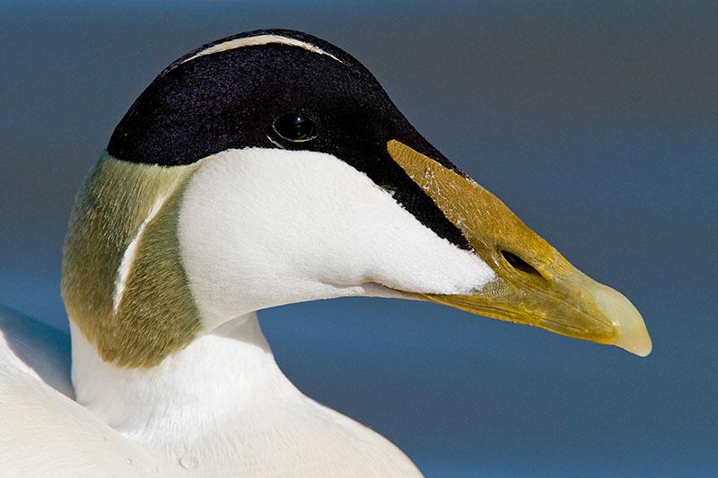 gambar-burung-jenis-burung-foto-burung-kicau-burung-kicauan-download